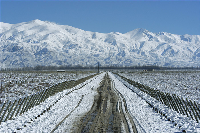 Snowed_Path_Andes Argentina wine industry